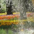 写真: 噴水とチューリップ
