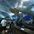 写真: 水族館