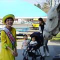 写真: 馬と美女