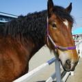 Photos: 馬
