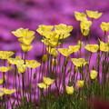 Photos: 花のある風景