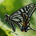 写真: 休む蝶