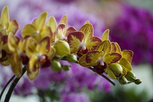写真: らんの花