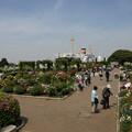 Photos: 山下公園バラ園