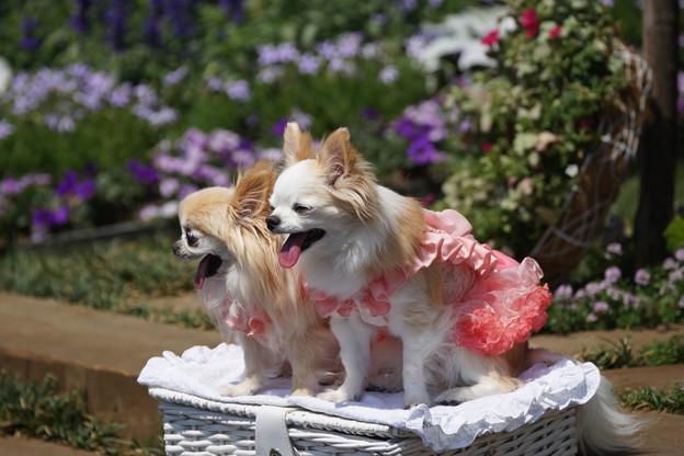 Photos: へばる犬