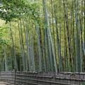 写真: 竹藪