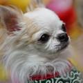 Photos: ペット犬