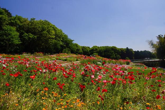 春の里山ガーデン