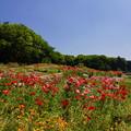 写真: 春の里山ガーデン