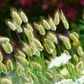 風になびく花