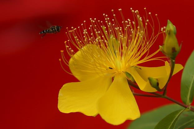 写真: 花とアブ