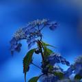 写真: 青い世界