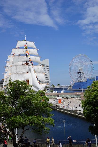 Photos: 帆船日本丸