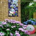 Photos: 紫陽花と傘