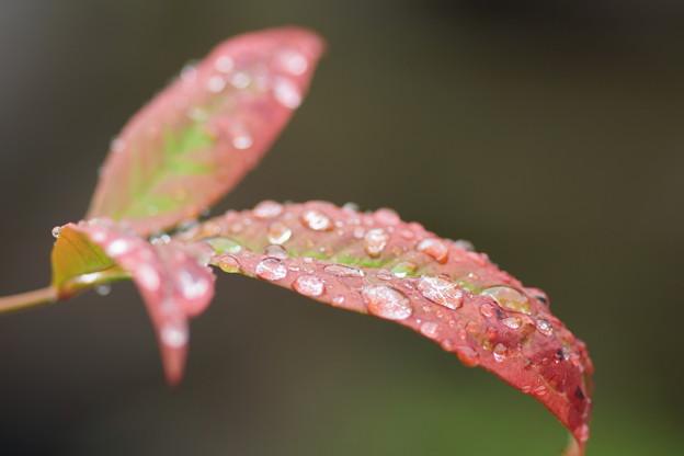 写真: 雨粒