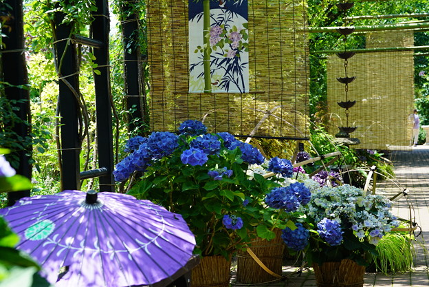 紫陽花祭り