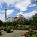 写真: 山下公園とマリンタワー