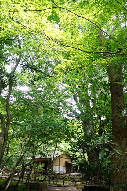 夏の春草蘆