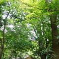 写真: 夏の春草蘆