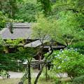 Photos: 夏の三渓園外苑