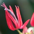 温室に咲く赤い花