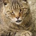Photos: 強面の猫