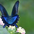 写真: 蝶の後ろ姿