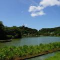 写真: 夏の三渓園