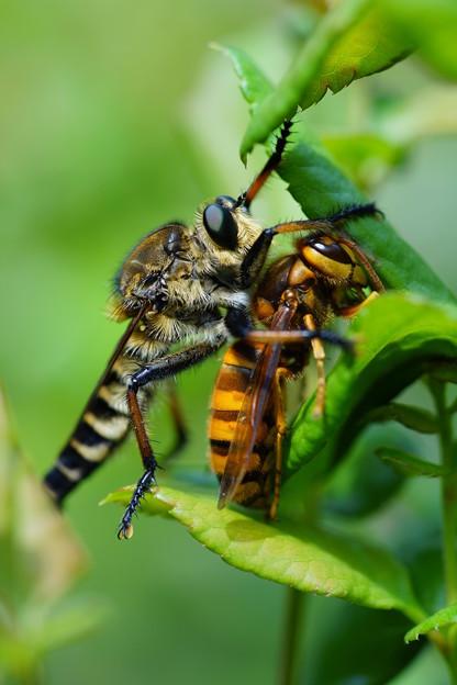 アブとスズメバチ