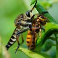 写真: アブとスズメバチ