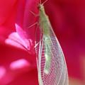 Photos: 綺麗な昆虫