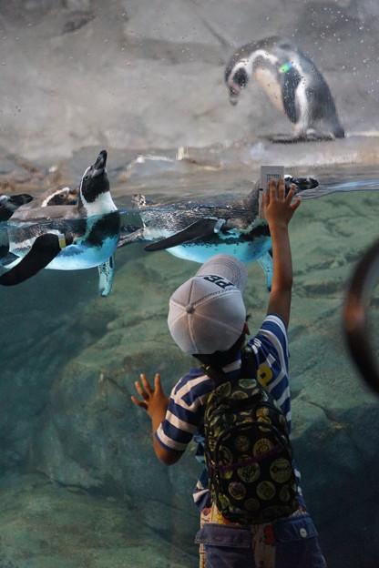 ペンギンにタッチする子供