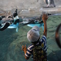 Photos: ペンギンにタッチする子供