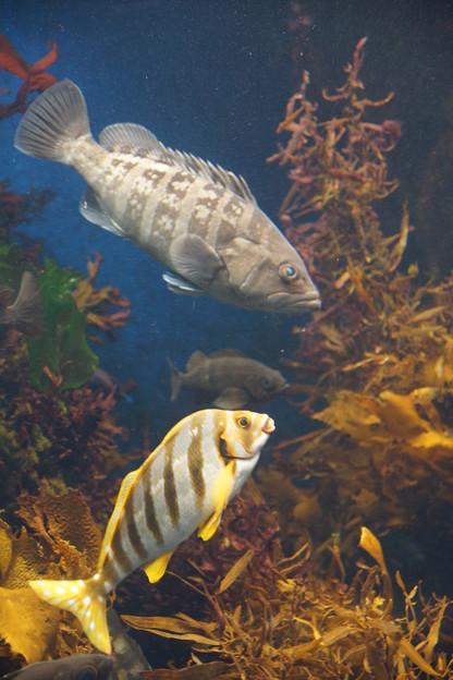 写真: 魚