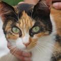写真: 丸い目をした猫