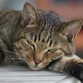 Photos: 猫