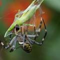 写真: クモとバッタ