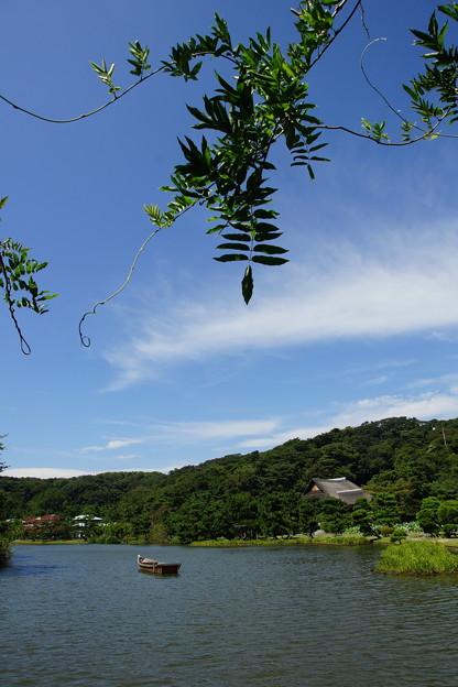夏の三渓園