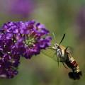 Photos: 花と蛾