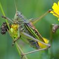 写真: 昆虫