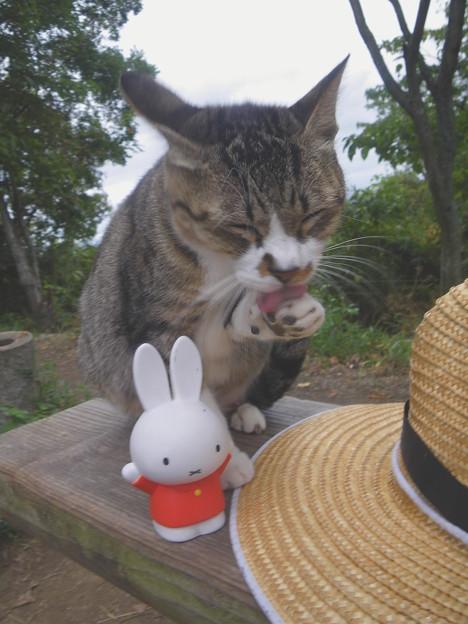 野良猫ちゃんとミッフィーちゃん