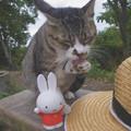 写真: 野良猫ちゃんとミッフィーちゃん
