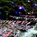 Photos: 激流の鯉のぼり