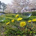 Photos: 春の共演
