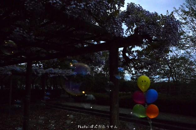 写真: 1523885703_53