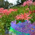 Photos: 1569070259_66