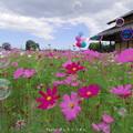 Photos: 1569161750_87