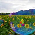 Photos: 1569591030_51