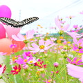 Photos: 1569707703_36