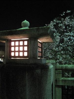 写真: 20140410 高野川 1